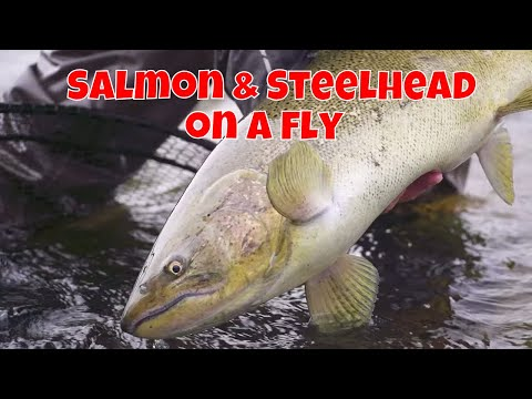 Salmon & Steelhead On A Fly | St. Marys' River