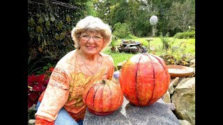 Portland Cement Balloons  Pumpkins Before storm in Ga.U.S.A.