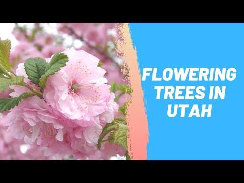 Flowering Trees in Utah