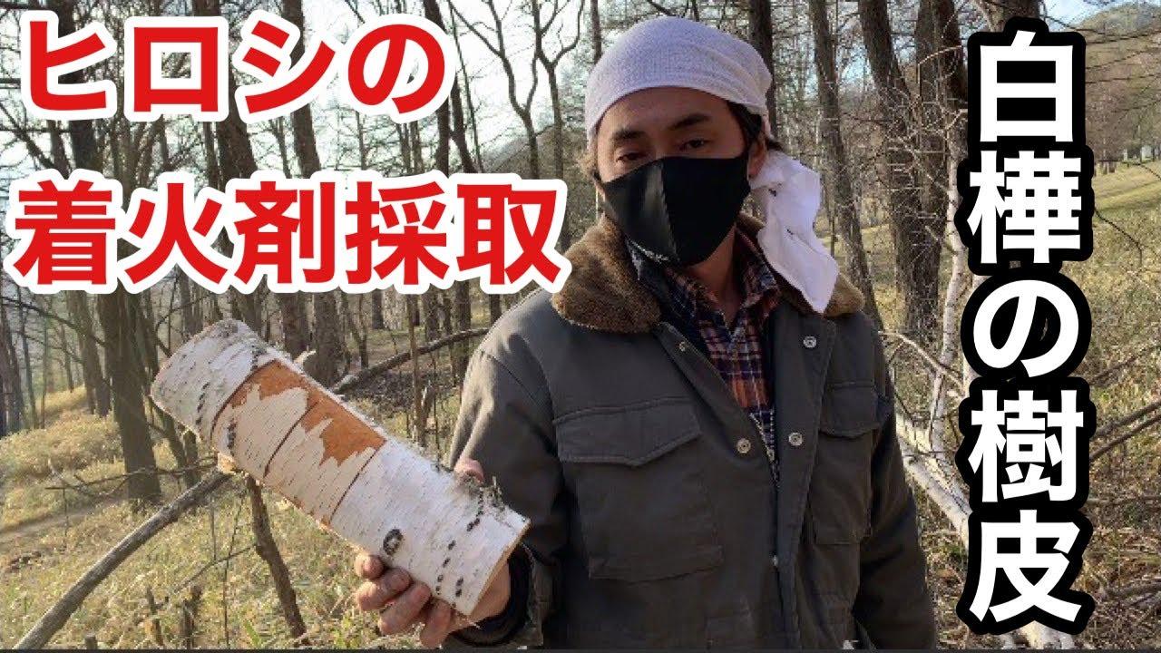 【ヒロシ】白樺の樹皮を採取【自然】【着火剤】【ヒロシのノコギリ】