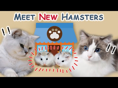 Cat And Hamster - Cats Meet My New Roborovski Hamsters