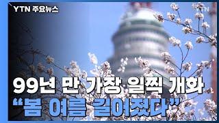 """서울 벚꽃, 99년 만에 가장 일찍 개화...""""…"""