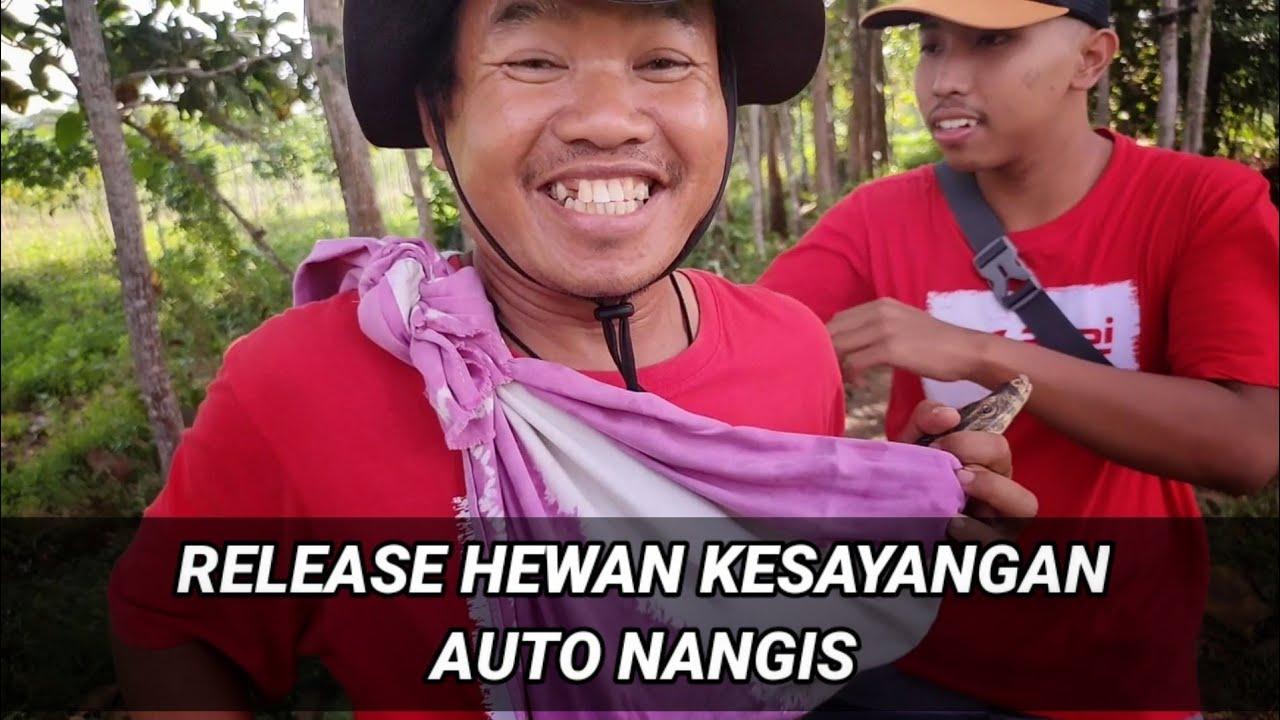 RELEASE BIAWAK KESAYANGAN - AUTO NANGIS