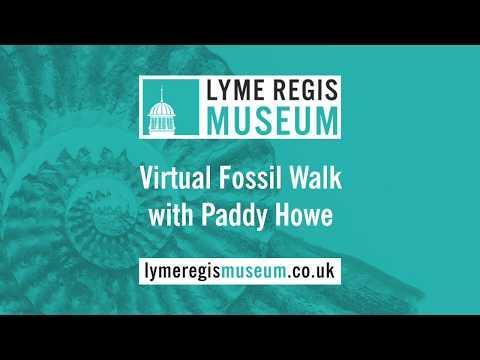 Lyme Regis Museum - Virtual Fossil Walk