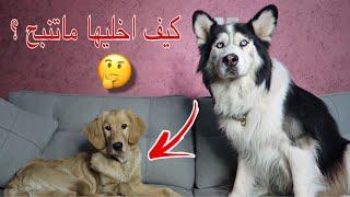 كلبه قولدن اصحابها تخلوا عنها بسبب !؟ 💔