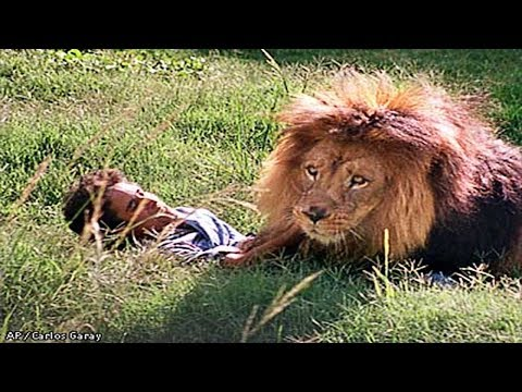 🔴Lion Attacks Humans To Death In Zoo ▶️  Animal Real Fight Human 2017