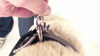 How to Use a Retractable Flexi Leash to Walk Your Dog (Petco)