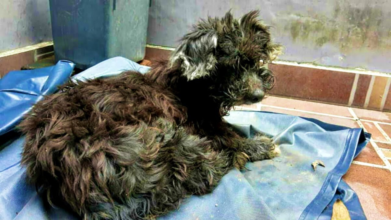 Cruel Owners Abandon Dog and Glue Her Eyes Shut so She Can't Find Her Way Home