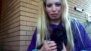 Ashley With Damien The Chocolate Toy Poodle With Green Eyes