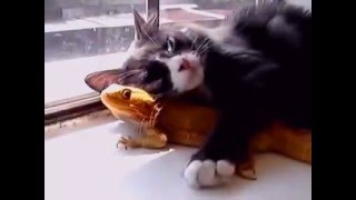 Cats and chameleon : Love!!! - SUBCRIBE NOW FOR MORE VIDEO !!