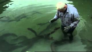 Fluss Monster  Killeraal