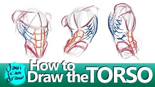 FIGURING OUT HOW TO DRAW THE MALE TORSO