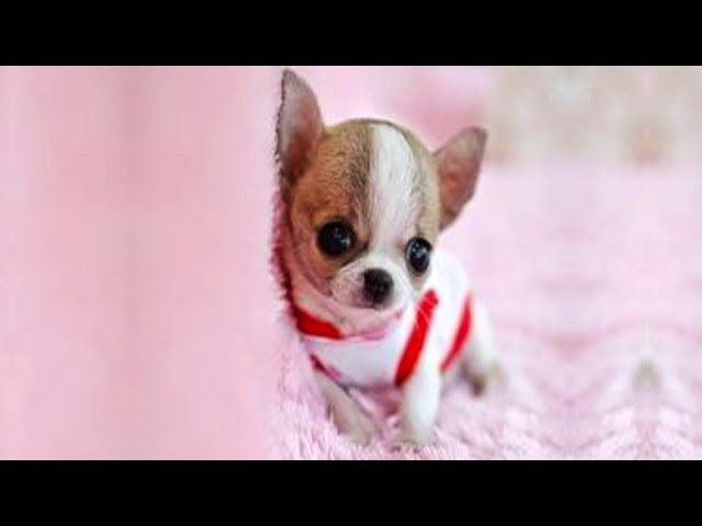 Cute is Not Enough - Funny Cats and Dogs Compilation #225