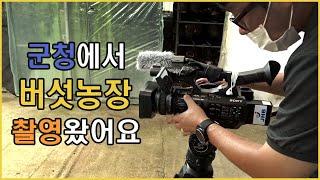 문상영 버섯농장 군청 촬영