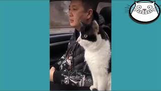 Talking Kitty Cats   ❤️   Cute Cats And Dogs    Most Funny Pet Videos360p