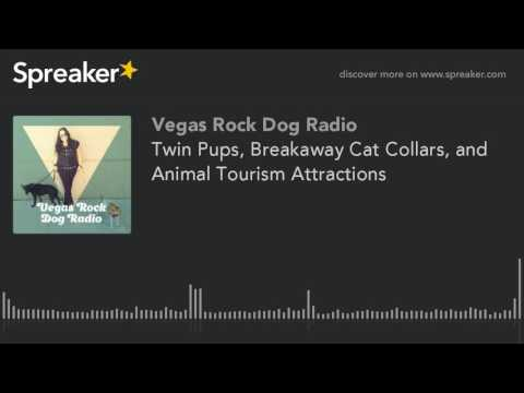 Twin Pups, Breakaway Cat Collars, and Animal Tourism Attractions
