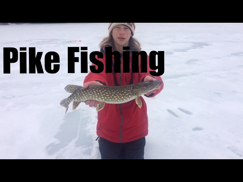 Catching Pike With Mitchell-Pike On 4 Pound Line
