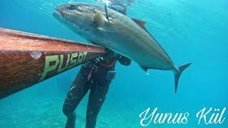 Spearfishing Amberjack Zipkinla Akya Avi 16 5 Kg