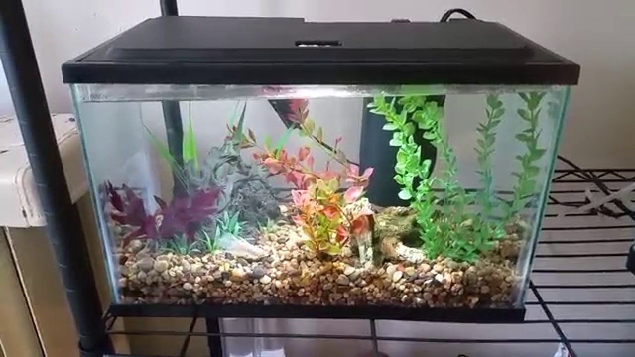 different betta fish tank sizes youtube