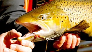 Searching Urban Rivers for Giant Brown Trout