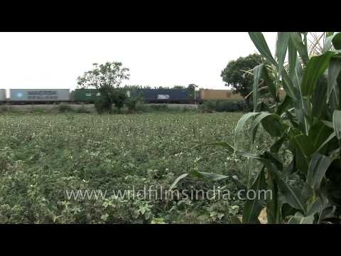 cargo-train-passing-an-agricultural-field-in-india