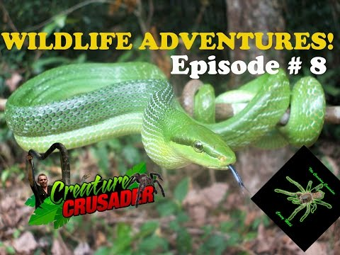 Ep # 8 Creature Crusader - Worlds most Dangerous Animals