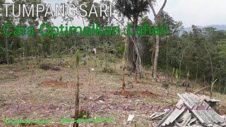 Cara Pemanfaatan lahan kosong ( tumpangsari agar lahan optimal )