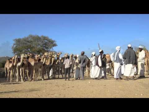 Eritrea - Keren Camel Market