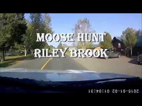 N.B. Moose Hunt 2017