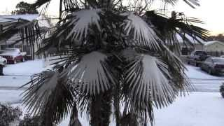 Http://www.asknaoma.com there is snow on my palm tree in virginia beach