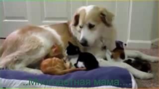 Прикольные животные Видео о животных