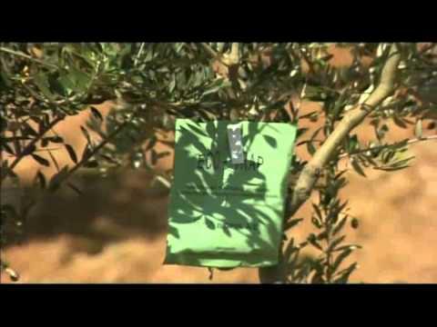 Life Coaching (Dott.ssa Malén Tortajada) - Comunicazione del cuore e psicologia olistica/spirituale from YouTube · Duration:  1 hour 3 minutes 16 seconds