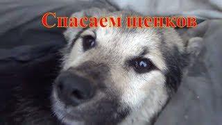 Спасаем щенков на даче. #собаки