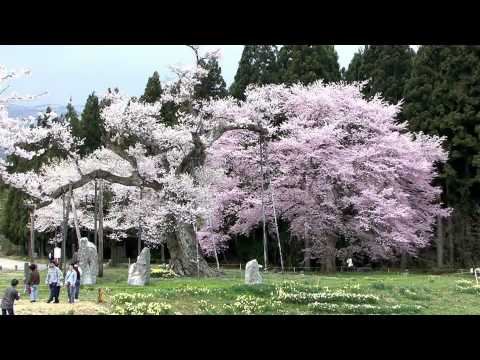 06 The Breath of Spring [ Another Japan across the mountains - Yamagata ]