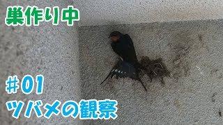 毎年ツバメが巣を作るので、今年は動画を撮ってみました。 ツバメがいる...