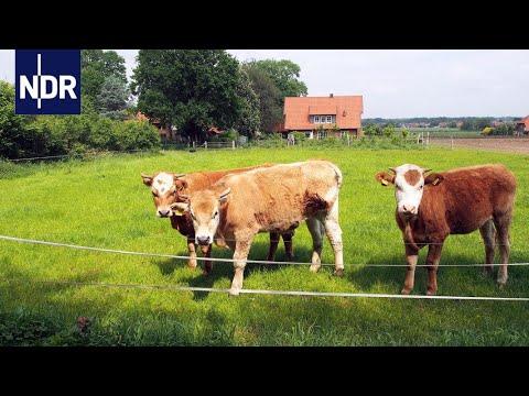 Klasse statt Masse - Ein Bauer stellt um auf Bio | die nordstory | NDR Doku