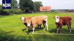 Klasse statt Masse - Ein Bauer stellt um auf Bio   die nordstory   NDR Doku