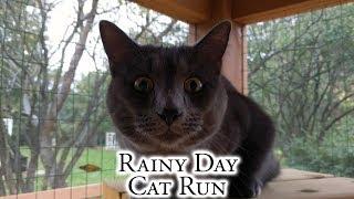 Rainy Day Cat Run thumbnail