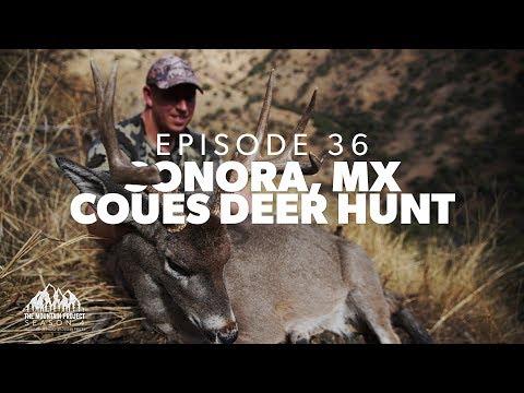 It's Matt's Turn In Mexico - Ep.36 - Sonora Coues Deer Hunt