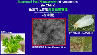 Integrated Pest Management of Aquaponics - 鱼菜常见作物综合虫害管理 (12-19-20)