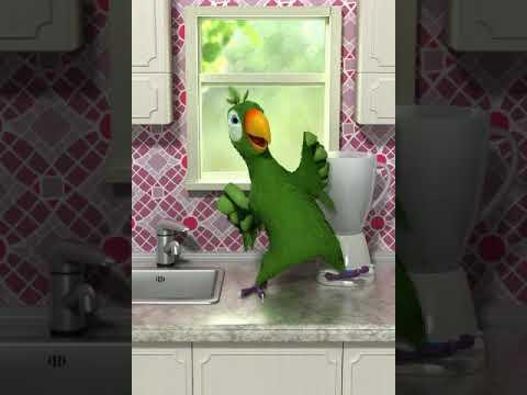 Самый смешной попугай в мире часть 2 - YouTube