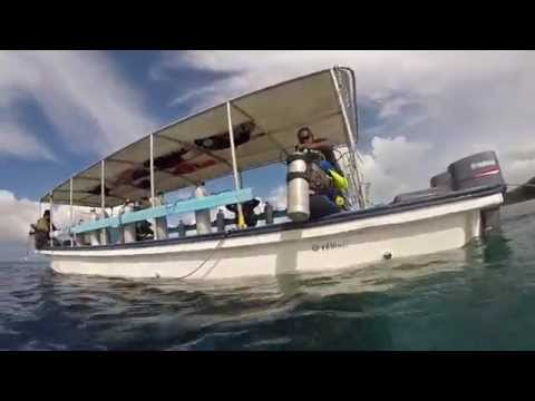New Drop Off Dive, Palau 1/19/2015