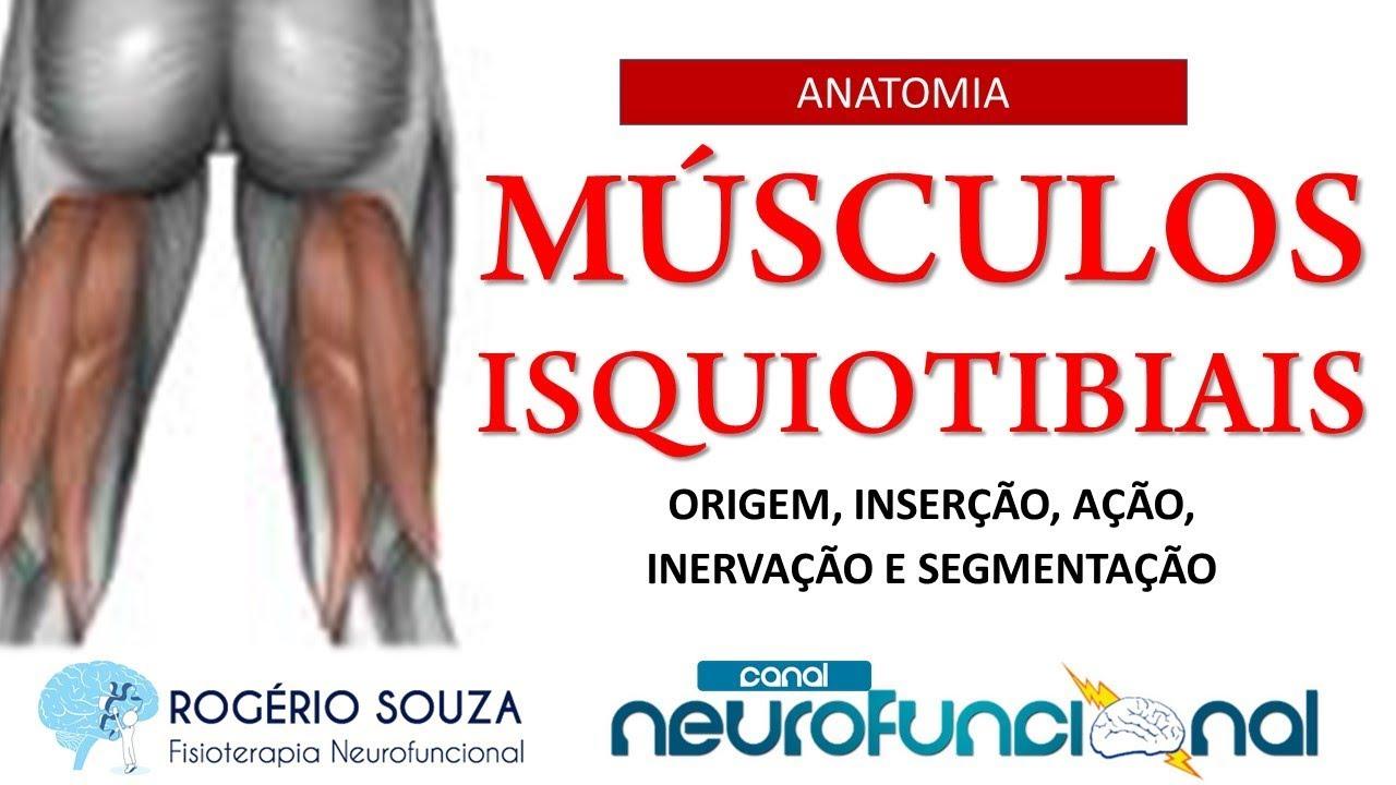 Perfecto Anatomía De Músculos Isquiotibiales Galería - Imágenes de ...