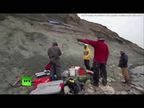 Ученые обнаружили новый подвид динозавров на севере Аляски