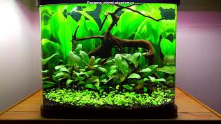 """Оформление аквариума """"Зеленые жемчужины"""" на 48 литров"""