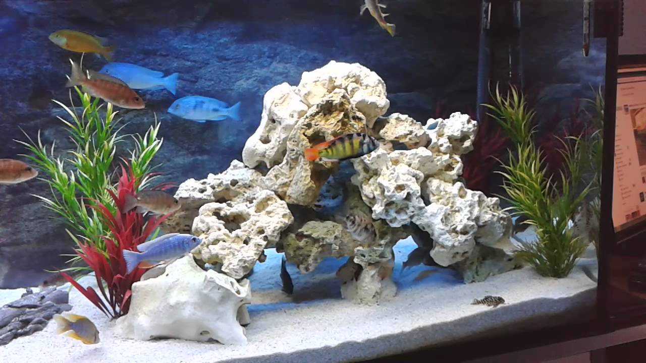 aendee malawi aquarium 450 liter youtube. Black Bedroom Furniture Sets. Home Design Ideas