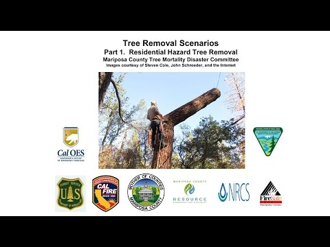 Mariposa County Residential Hazard Tree Removal Tree Mortality Workshop #2