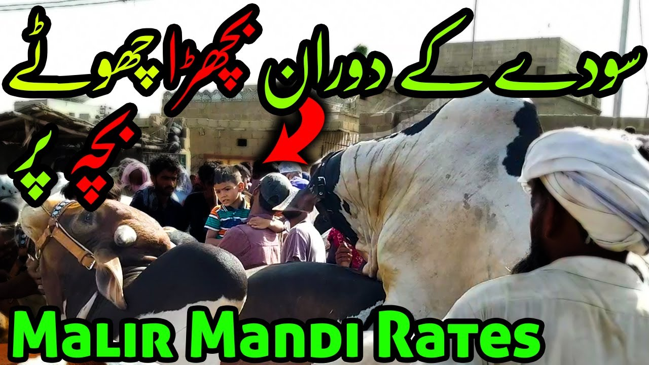 SODAY Ke Doran Chot Lag Gai | Malir Cow Mandi 2020 RATES BARGAINING | Bakra Eid 2020 Qurbani Cows