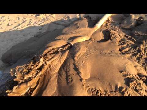 Намыв пляжа мотопомпой для грязной воды