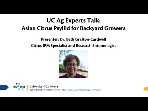 UC Ag Experts Talk: Asian Citrus Psyllid For Backyard Growers